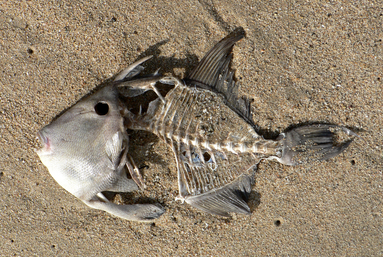 Dead_fish_on_the_beach