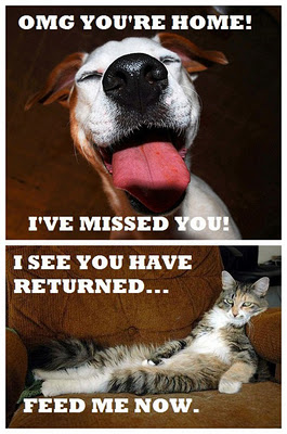 dogs-vs-cats-emotions