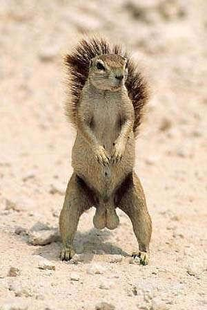 squirrelnuts