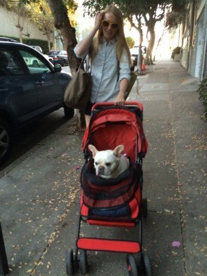 Yes, that's a dog in that baby carriage and not a child