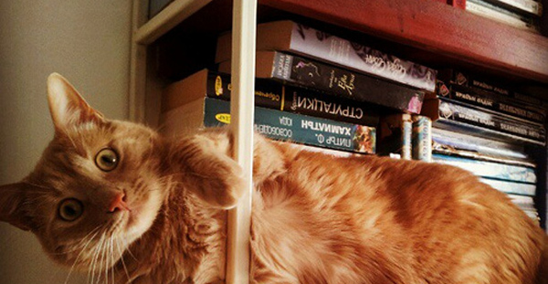 To the point where your bookshelf starts attracting random cats.