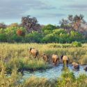 The Search For Meaning In South Africa's Kruger Park